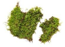En rugge av grön mossa som isoleras på en vit bakgrund royaltyfria foton