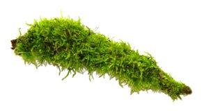 En rugge av grön mossa som isoleras på en vit bakgrund arkivbild