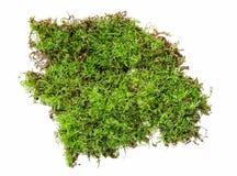 En rugge av grön mossa som isoleras på en vit bakgrund arkivfoton