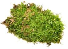 En rugge av grön mossa som isoleras på en vit bakgrund fotografering för bildbyråer