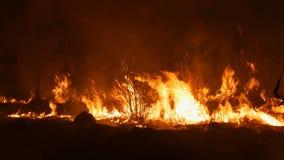 En ruskig farlig lös brand på natten i ett fält Brännande torrt sugrörgräs Ett stort område av naturen i flammor stock video