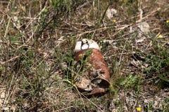 En Rusty Can Abandoned In en gräsmatta Fotografering för Bildbyråer