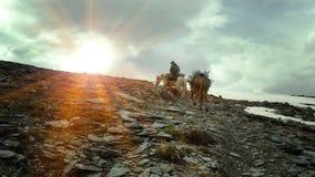 En ryttare med två hästar promenerar banan till bergen royaltyfri foto