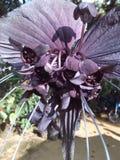 En sällsynt orkidéblomning fotografering för bildbyråer