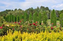 En säng av rosor och cypressavenyn i rosdalen Den Kislovodsk semesterorten parkerar fotografering för bildbyråer
