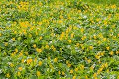 En sätta in av blommor Royaltyfri Foto