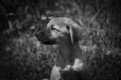 En sådan gullig valp värma sig i solen svart white fotografering för bildbyråer