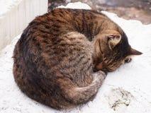 En sömnig strimmig katt - katt Royaltyfri Foto