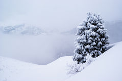 en sörjer snowtreen Royaltyfri Foto