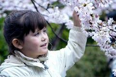 En söt flicka med en fröjd trycker på en sakura för den körsbärsröda blomningen filial Arkivfoto