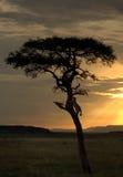 En safari Imágenes de archivo libres de regalías