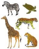 En samling av färgillustrationer av djur Arkivfoto