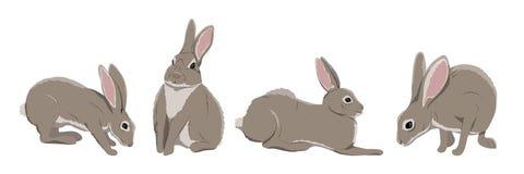 En samling av hare i olikt poserar royaltyfri illustrationer