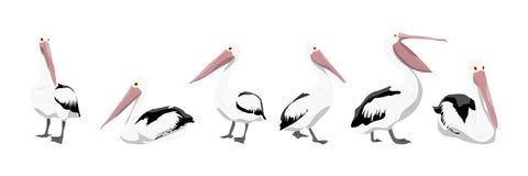 En samling av pelikan i olikt poserar stock illustrationer