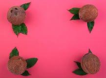En sammansättning av kokosnötter på en rosa bakgrund En bästa sikt på hawaianska kokosnötter med sidor Uppsättning av sunda exoti royaltyfri foto