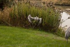 En sandhillkran som spelar med en rugge av gr?nt gr?s arkivfoto