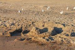 En sandslott som har delvis förstörts av vågor på en öde strand med snäppor som omkring kör royaltyfria bilder