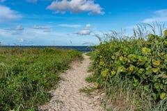 En Sandy Path Leads till stranden royaltyfri fotografi