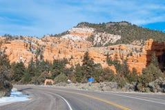 En scenisk huvudväg för öken Fotografering för Bildbyråer