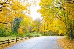 En scenisk sikt av ett staket fodrade vägen som går in i höstskogen fotografering för bildbyråer