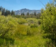 En scenisk sikt nära Lake Tahoe royaltyfri bild