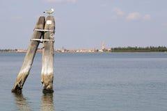 En seagul över en bricola Royaltyfri Fotografi