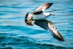 En Seagull arkivfoton