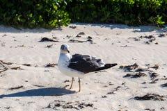 En Seagull i havet Royaltyfria Foton
