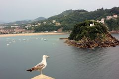 En seagull och en liten ö i ett skott arkivbilder