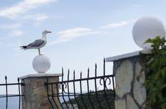 En seagull placerar på en fance Royaltyfri Fotografi