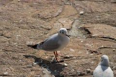 En seagull som vilar på en vagga royaltyfria foton