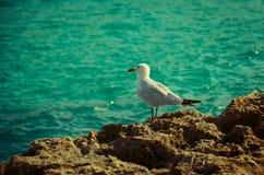 En seagullsida beskådar royaltyfria foton
