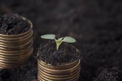 En semant l'usine semez l'élevage sur la pile de l'argent de pièces de monnaie Image stock