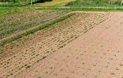 En serie av fältet som planterar, den plöjde jordbruksmarken, okuchit behandlade jordbruks- fält Royaltyfri Fotografi