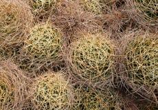 En serie av kaktuns med taggar från över royaltyfria foton
