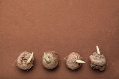 En serie av spirade kulor av blommor på en brun bakgrund, kopieringsutrymme arkivfoto