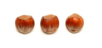 En Shell Nuts photo stock