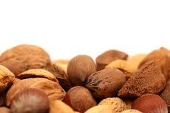 En Shell Nuts photos stock