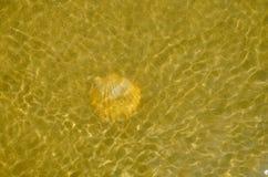 En shellon den sandiga stranden Arkivfoto