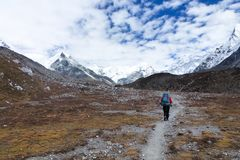 En sherpa på hans väg till ömaximumet i Chukkung, Everest baslägertrek, Nepal Arkivfoto