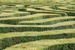 En sikt över överkanten av en labyrint med trevligt klippt idegransträ slingra sig Royaltyfria Bilder