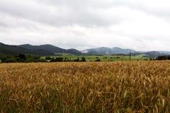 En sikt över ett fält i Tyskland Arkivfoto