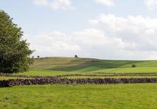 En sikt över fältet arkivfoto