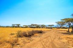 En sikt av den afrikanska savannahen Arkivfoton