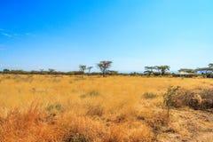 En sikt av den afrikanska savannahen Arkivbilder