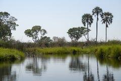 En sikt av den Okavanga deltan - Botswana - Afrika arkivbild