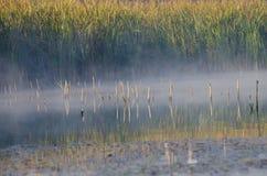 En sikt av dimman på yttersidan av sjön Royaltyfria Foton