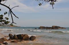 En sikt av en havsstrand med stenar och trädfilialer Royaltyfri Foto
