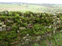 En sikt av en mossa täckte väggen för den torra stenen arkivbild