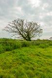 En sikt av ett blomningträd längs ett trästaket med gräs och grön vegetation under en vit molnig himmel arkivfoto